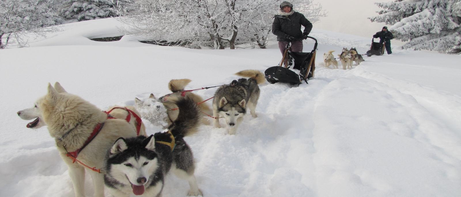 Dog sledding snowshoe wv webcam